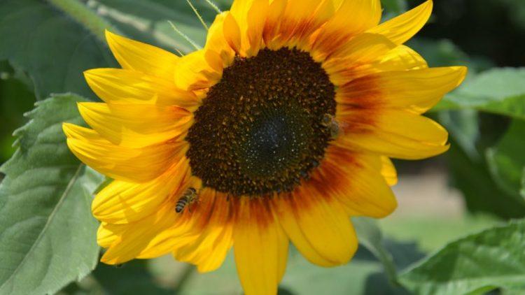 Domestica imanje u bojama ljeta