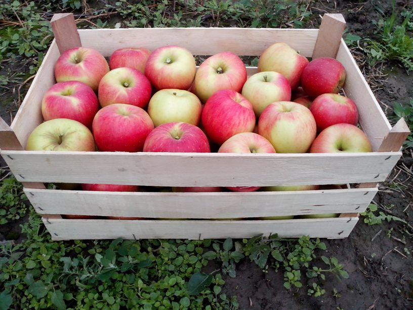 Manjak ambalaže za voće