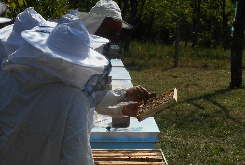 Praktična obuka iz pčelarstva