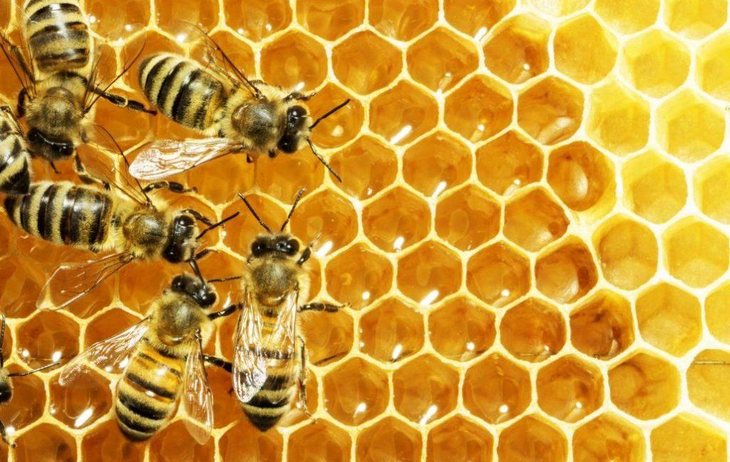 Proizvodnja polenovog praha
